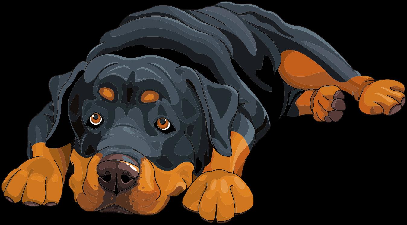 Good Dog Web Design
